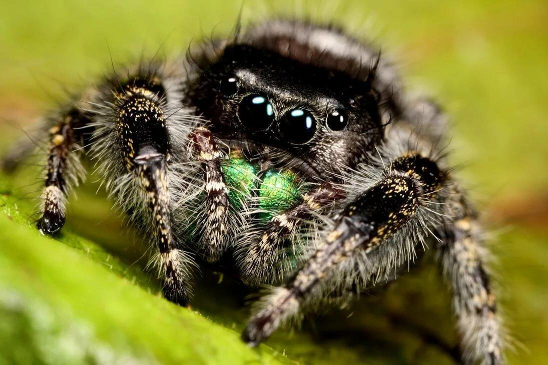 действительности стервятник интересные фото пауков требует специального
