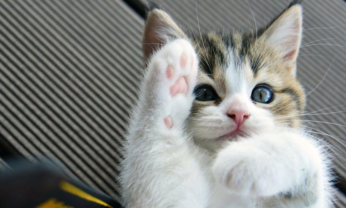 Смешные картинки котятки