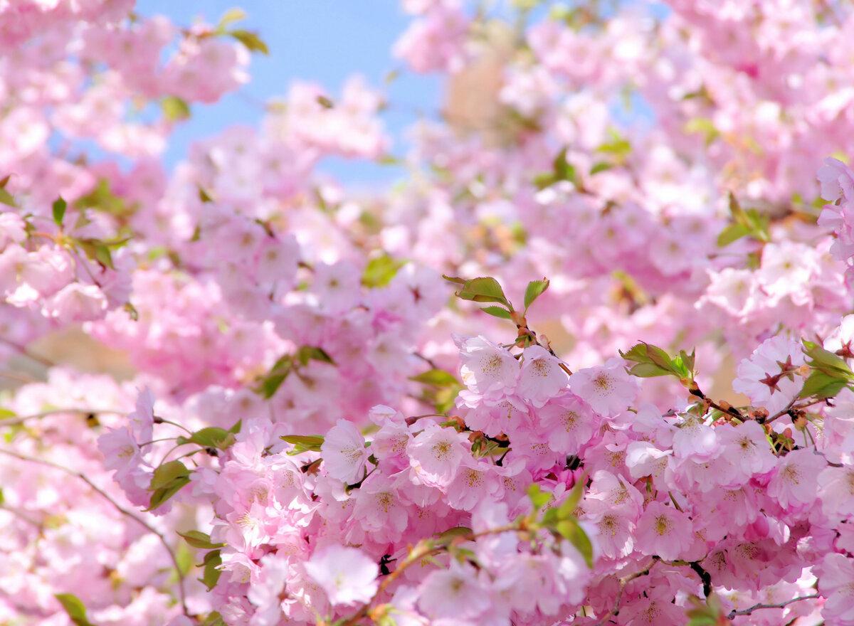 Днем рождения, красивые картинки с весны