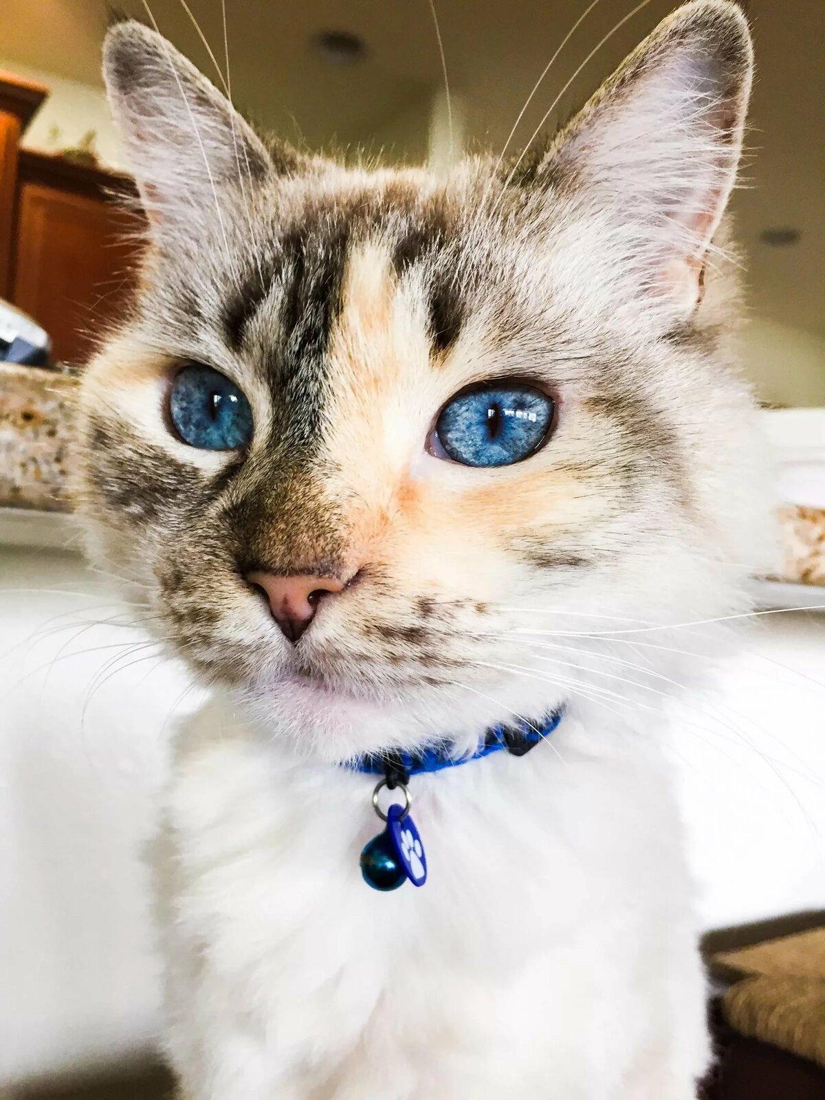 Картинка кота лукойл каталога