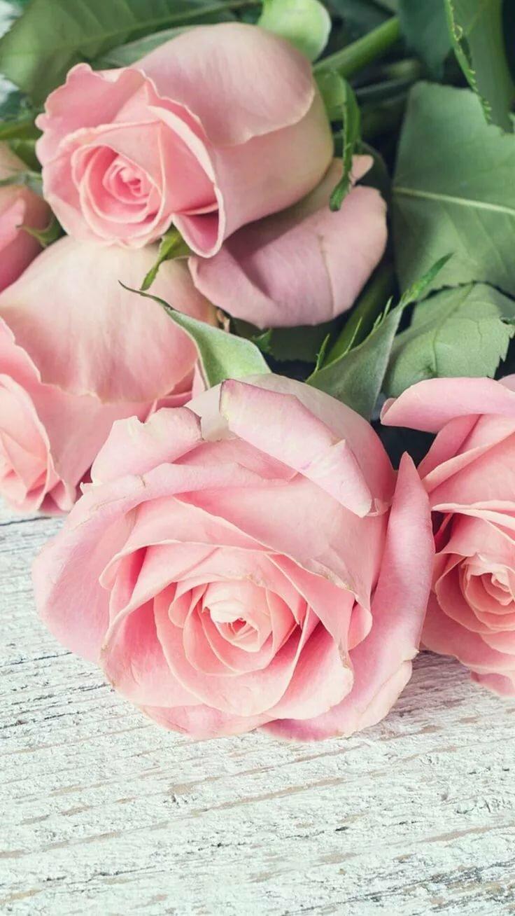 Картинки для ватсапа цветы новомодные