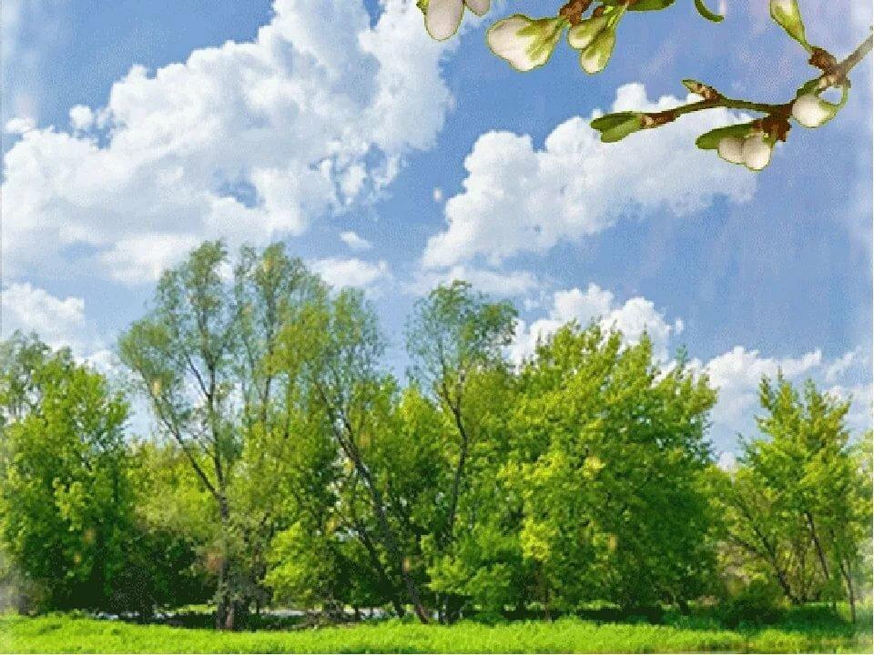 коррекции зрения пейзаж весна картинки анимационные между тем, каждом