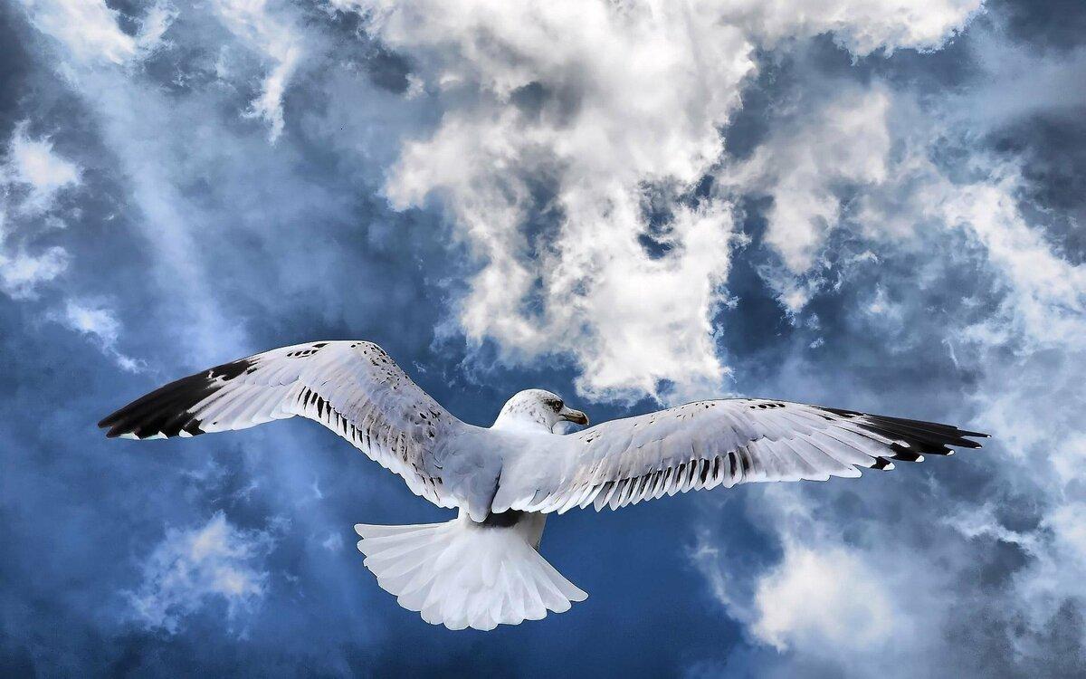 Картинки красивых птиц в полете