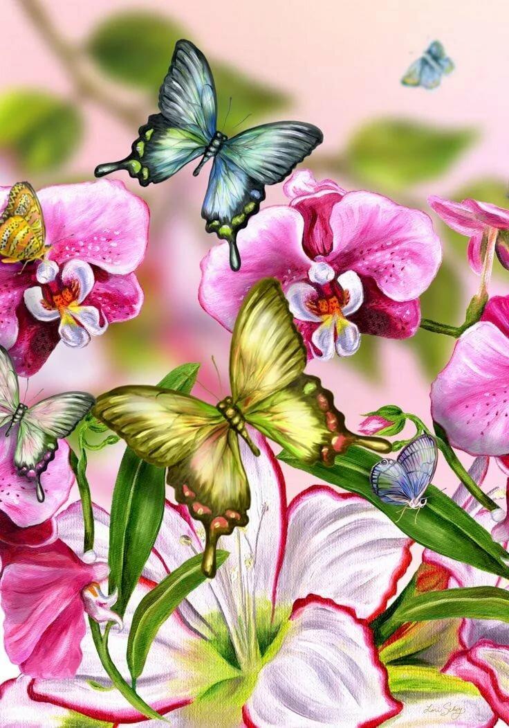 Картинки, бабочки на цветах картинки рисунки