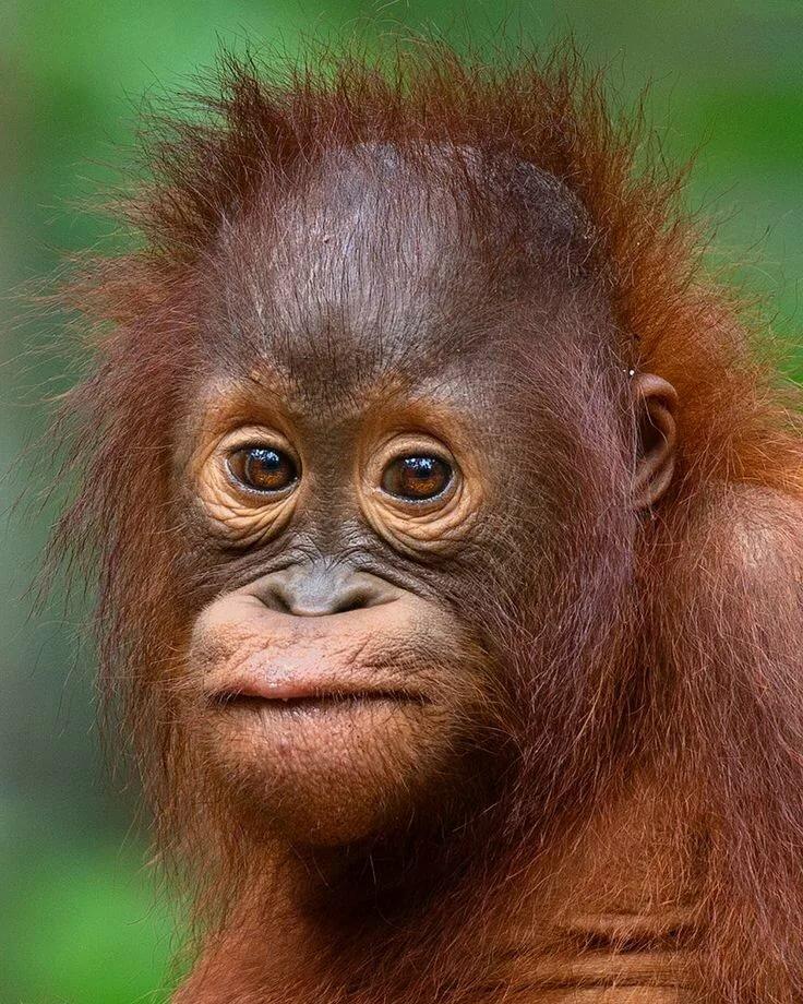 дома картинки грустная обезьяна закрепляет знания устройстве