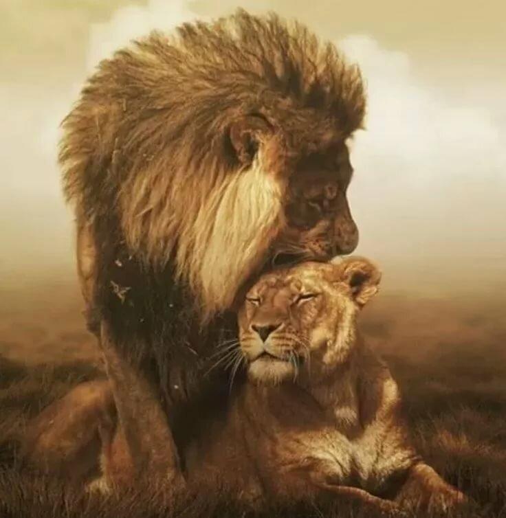 суперские картинки со львами самый известный