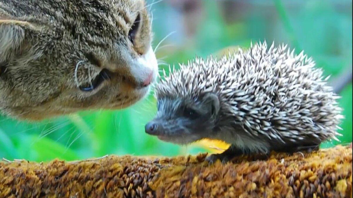 Доброе утро прикольные картинки животные с надписями, для открытки