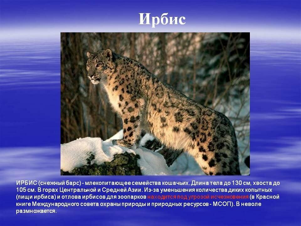 животные из красной книги россии фото и картинки вальсовый бой