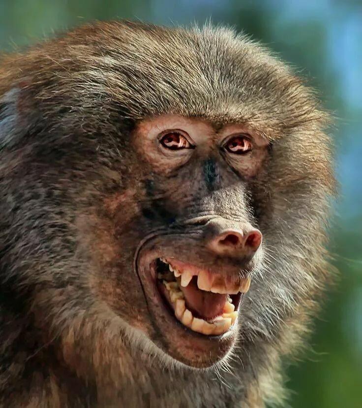 По дороге с облаками обезьянка картинки мастер-класс фото