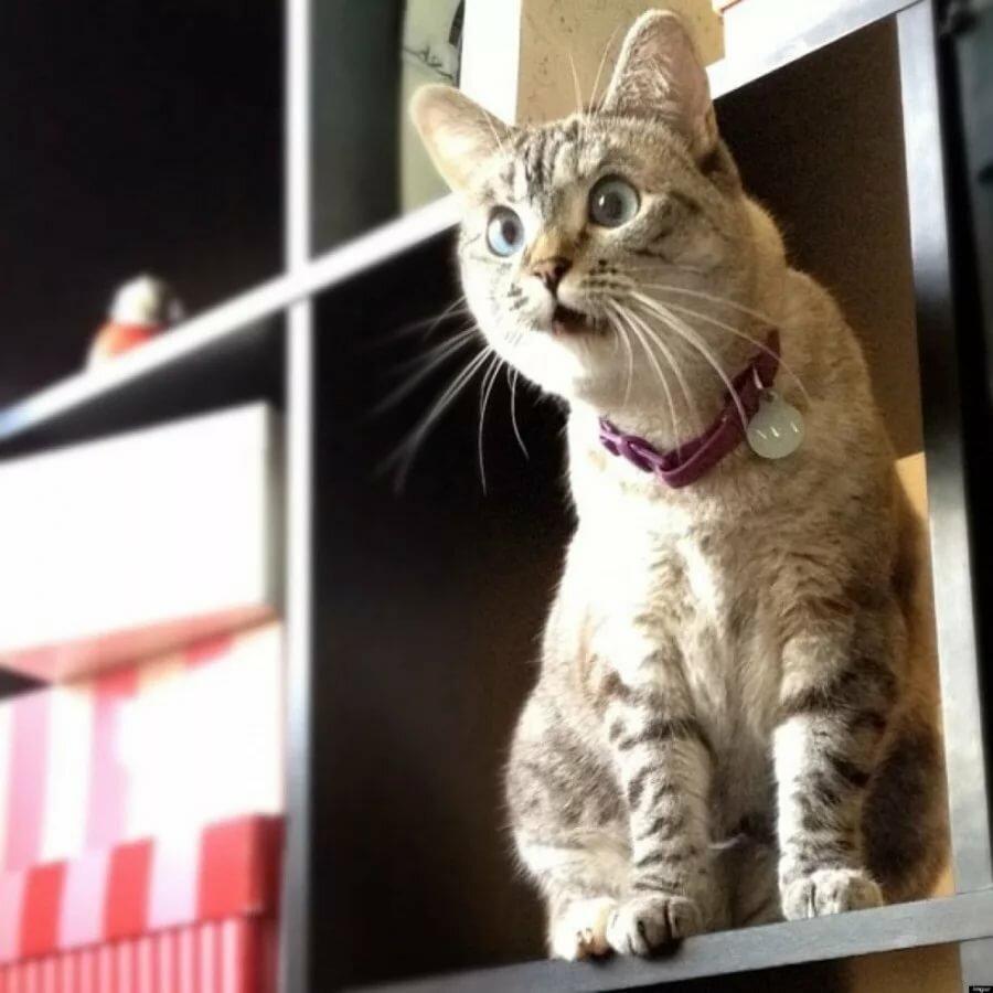 картинки удивленных котиков современный человек