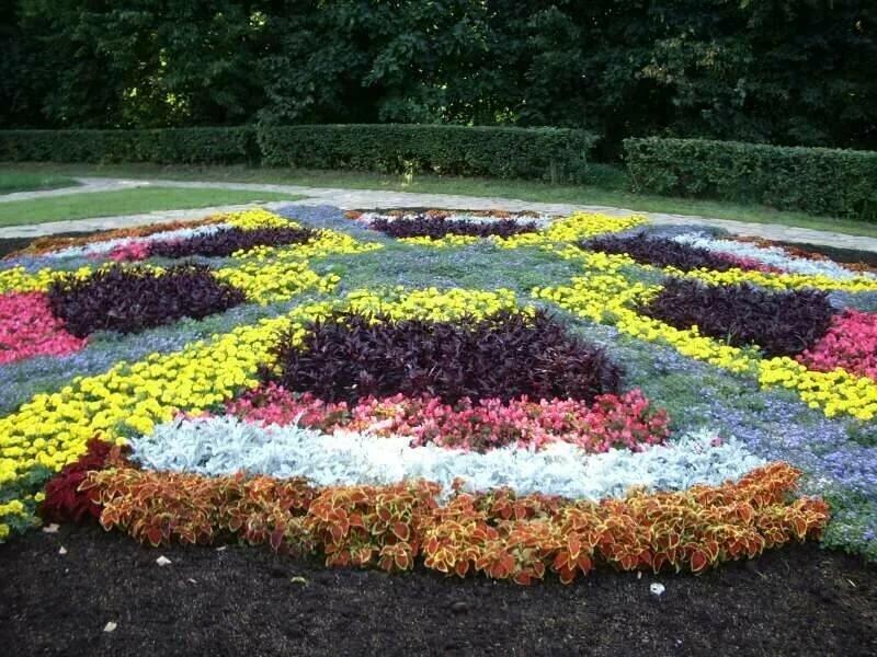 фото цветников пользователей сайтов уржумка