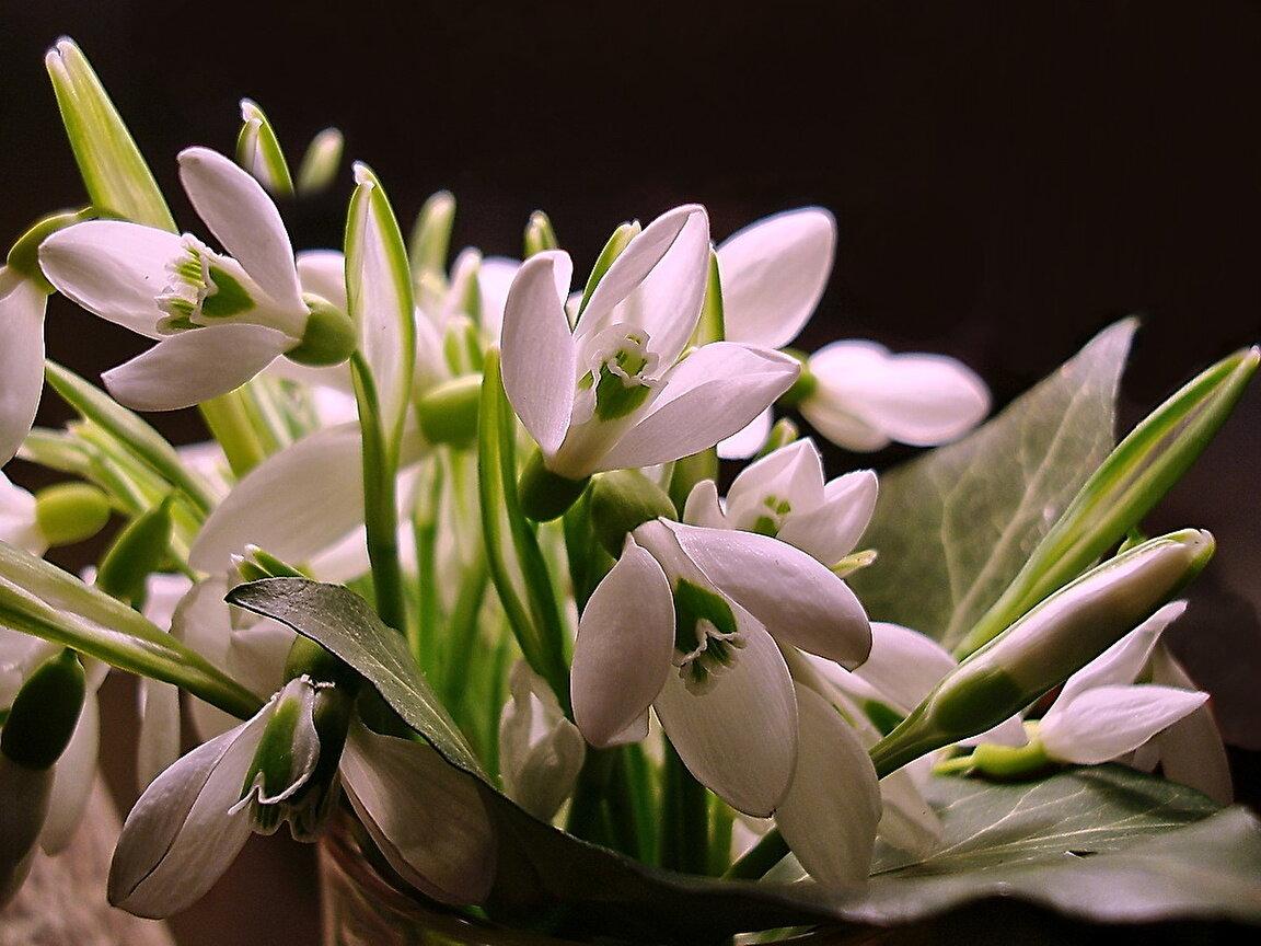 Картинки, красивые открытки про весну фото