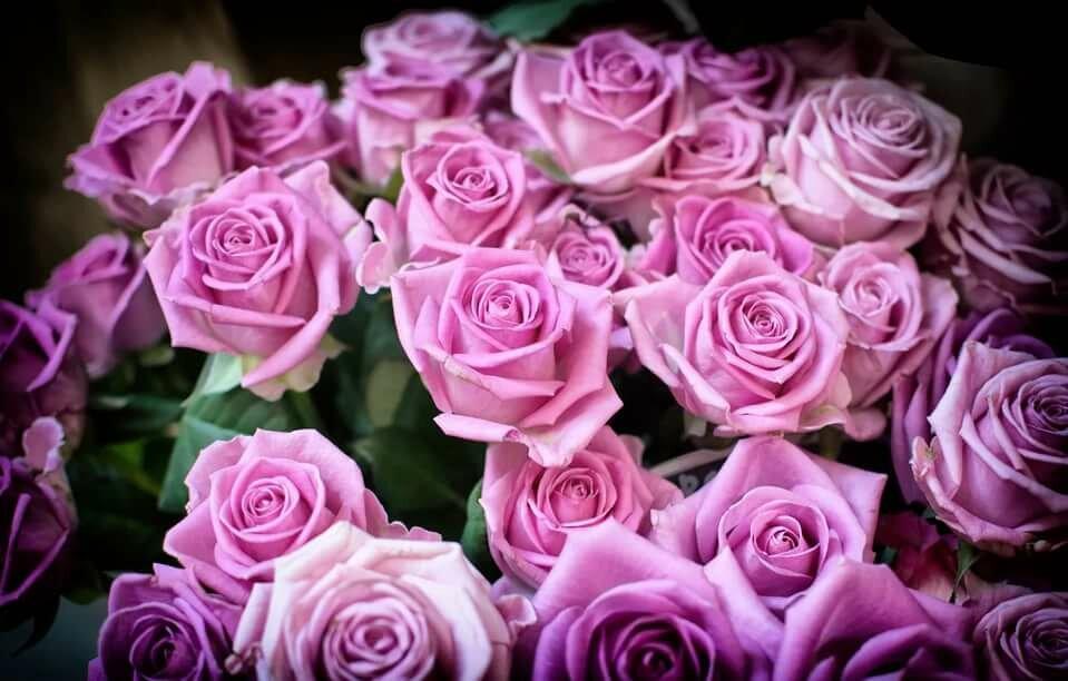 Марта своими, розы открытка смотреть онлайн