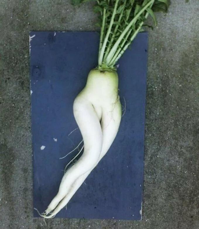 эротические фото фруктов и овощей