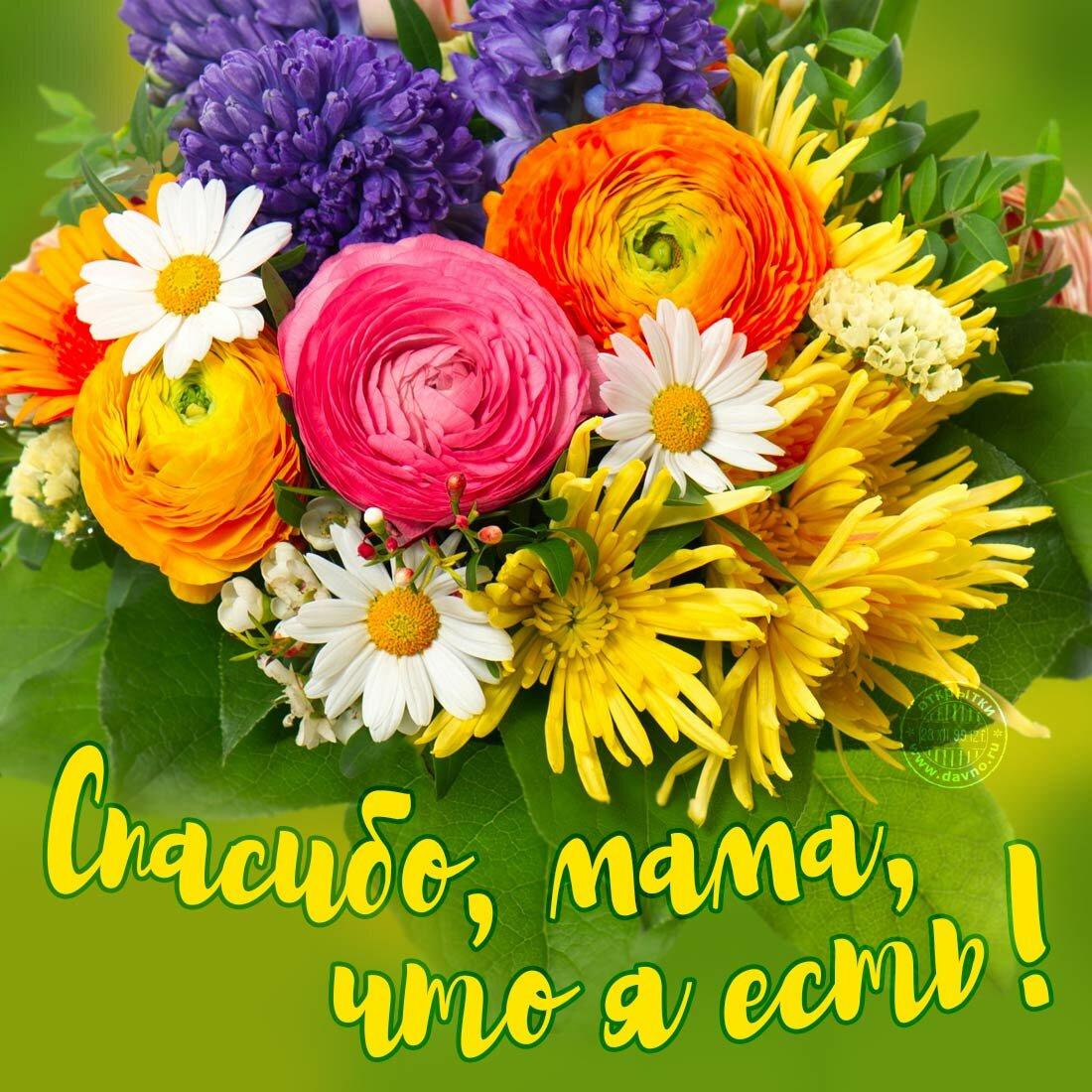 День матери открытки поздравления фото красивые хорошего качества, приколом для