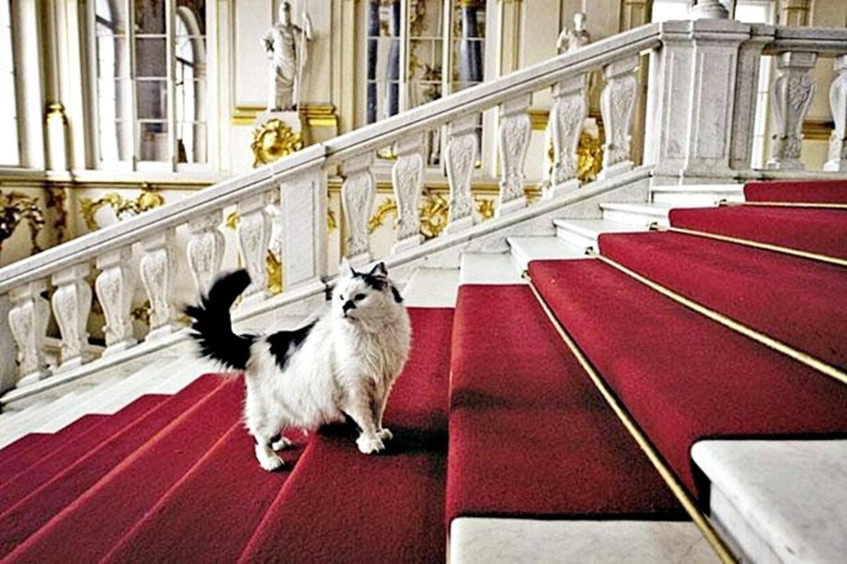 является картинки кот и собака во дворец страшной находке