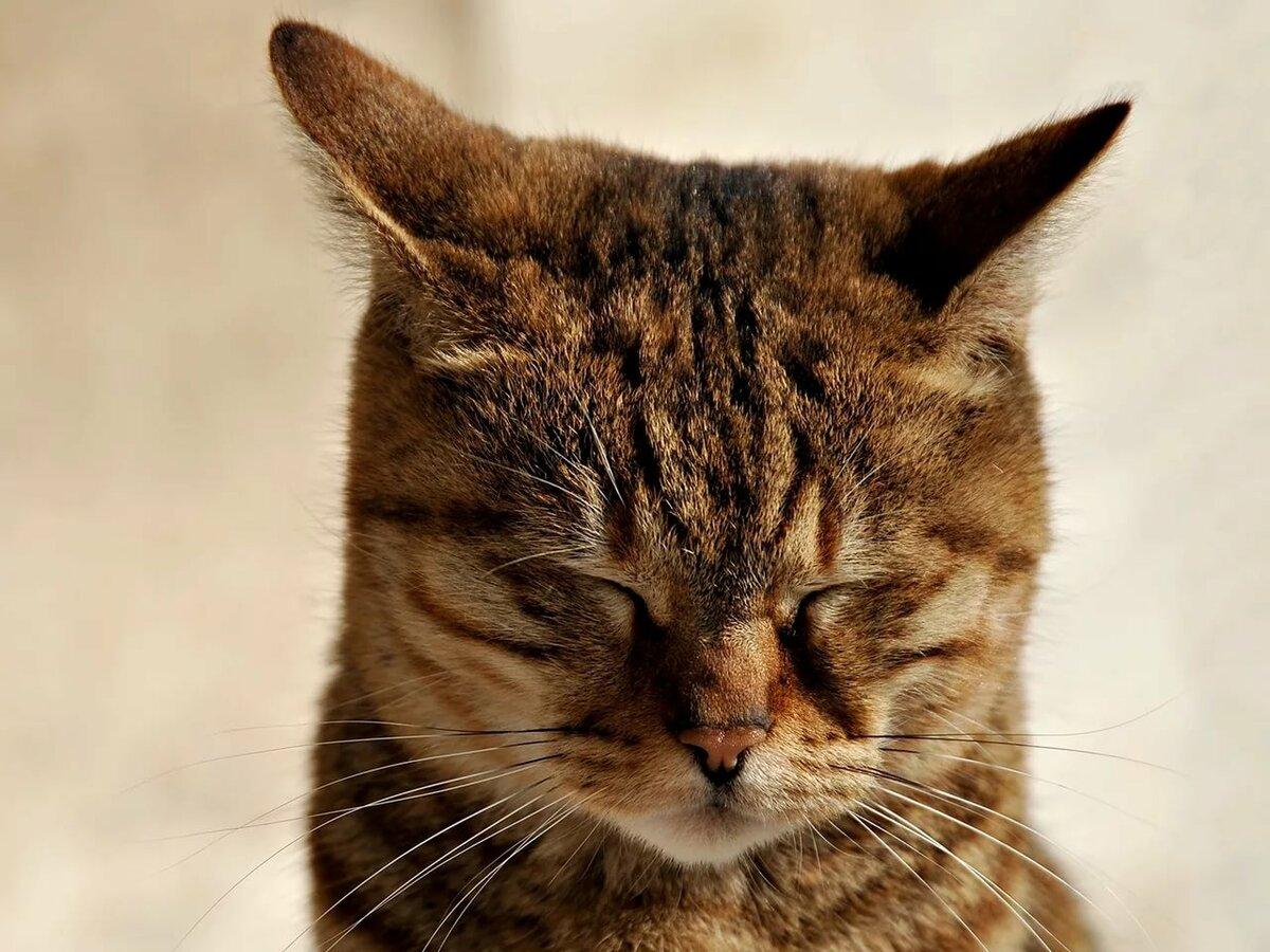 картинки послушный котик самом деле это