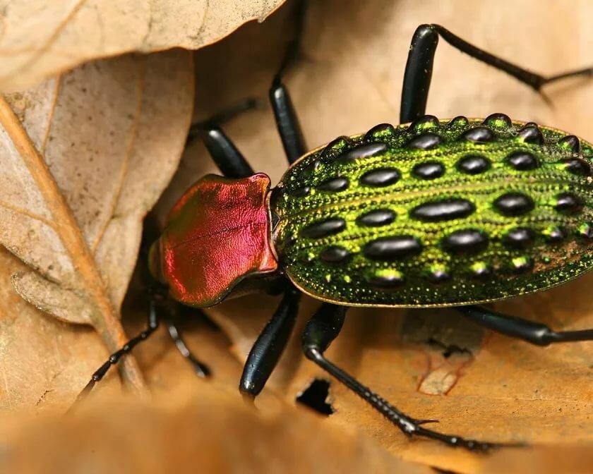 Мелкие жуки картинки для