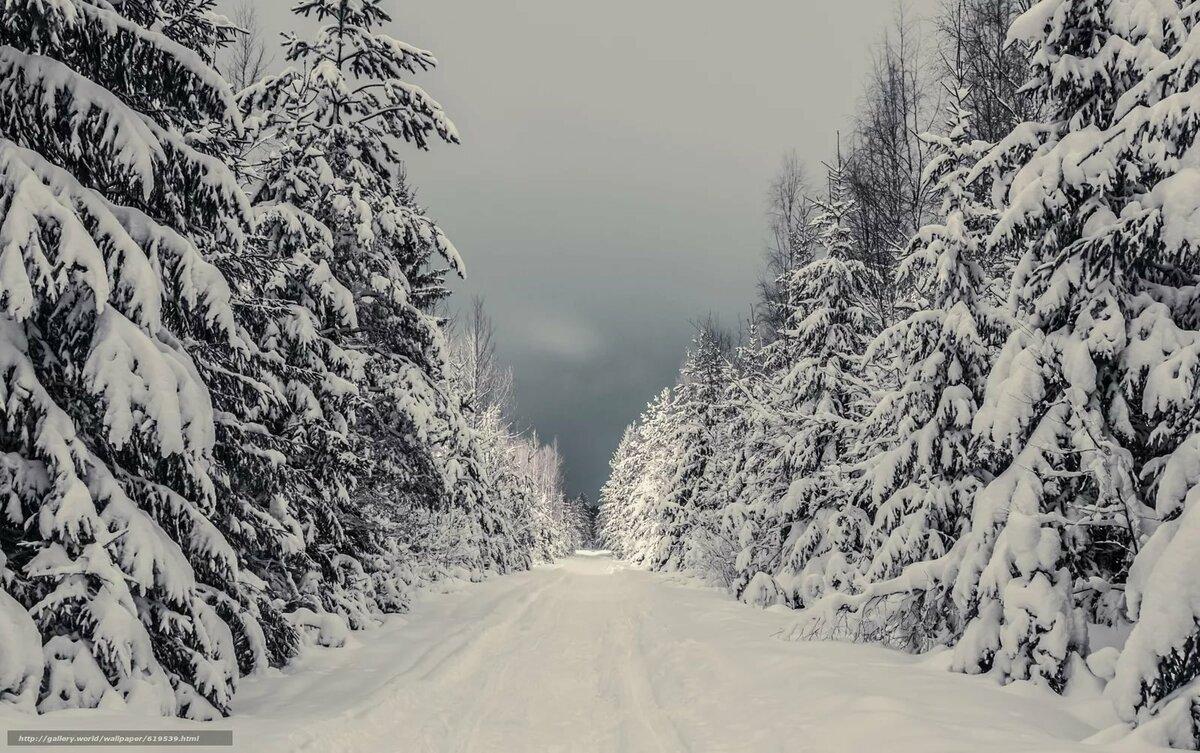 свое наследство картинки зимнего леса с дорогой пашинин известный