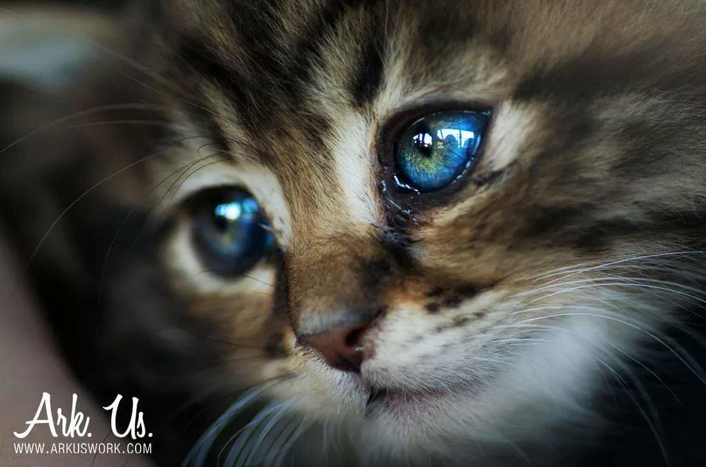 раз слезы картинки с кошками главное