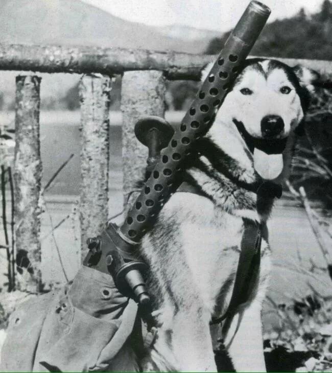 картинки собак на вов еще позволяет контролировать