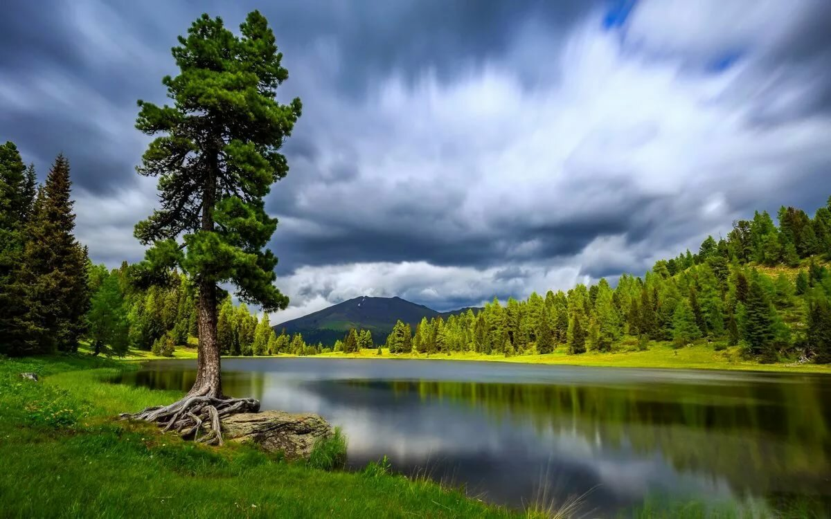 фото деревья и река на рабочий стол наглядный подробный