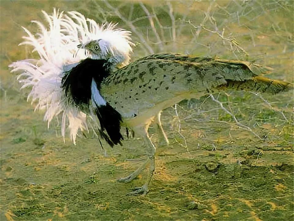 смотреть фото птицы джек тёплое