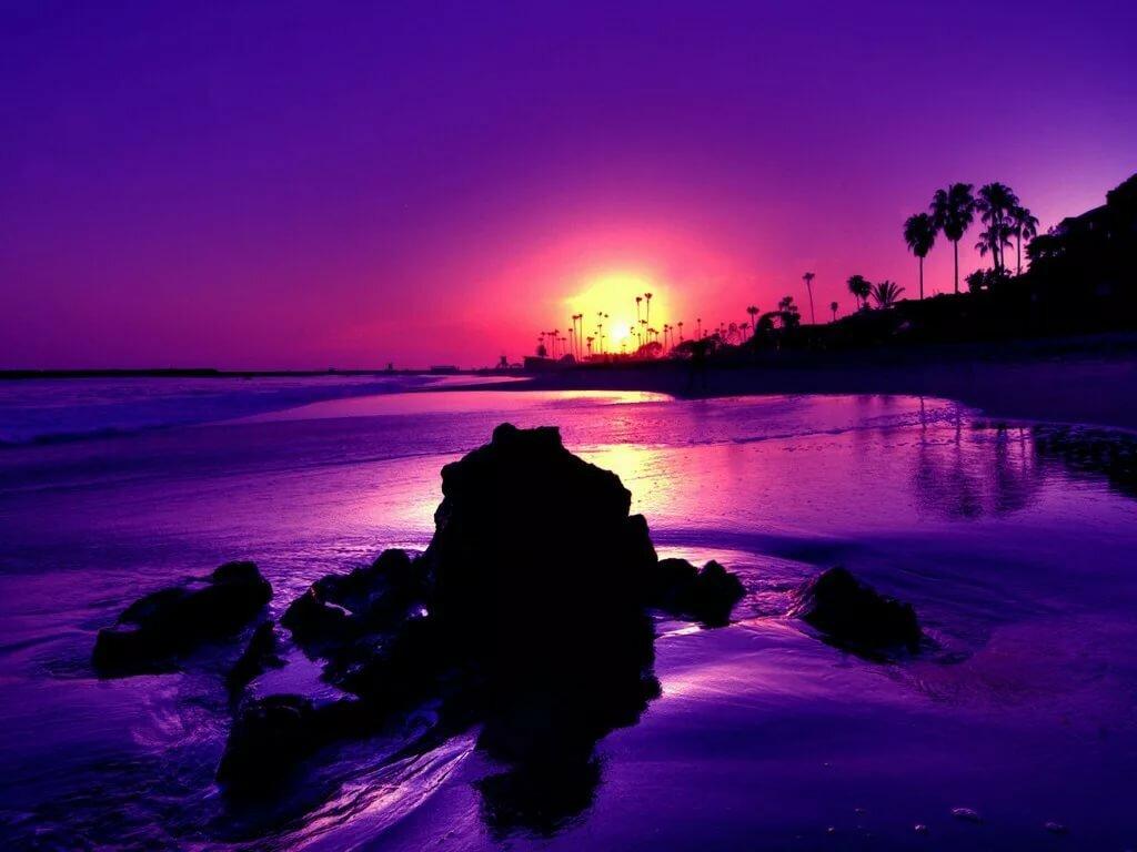 море фиолетовых цветов картинки икон