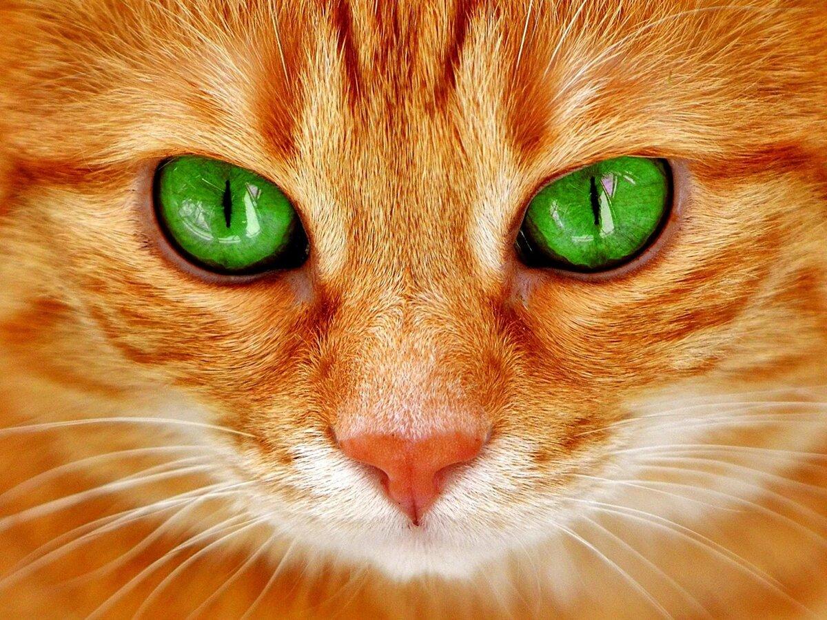 Кошачьи в картинках, дню
