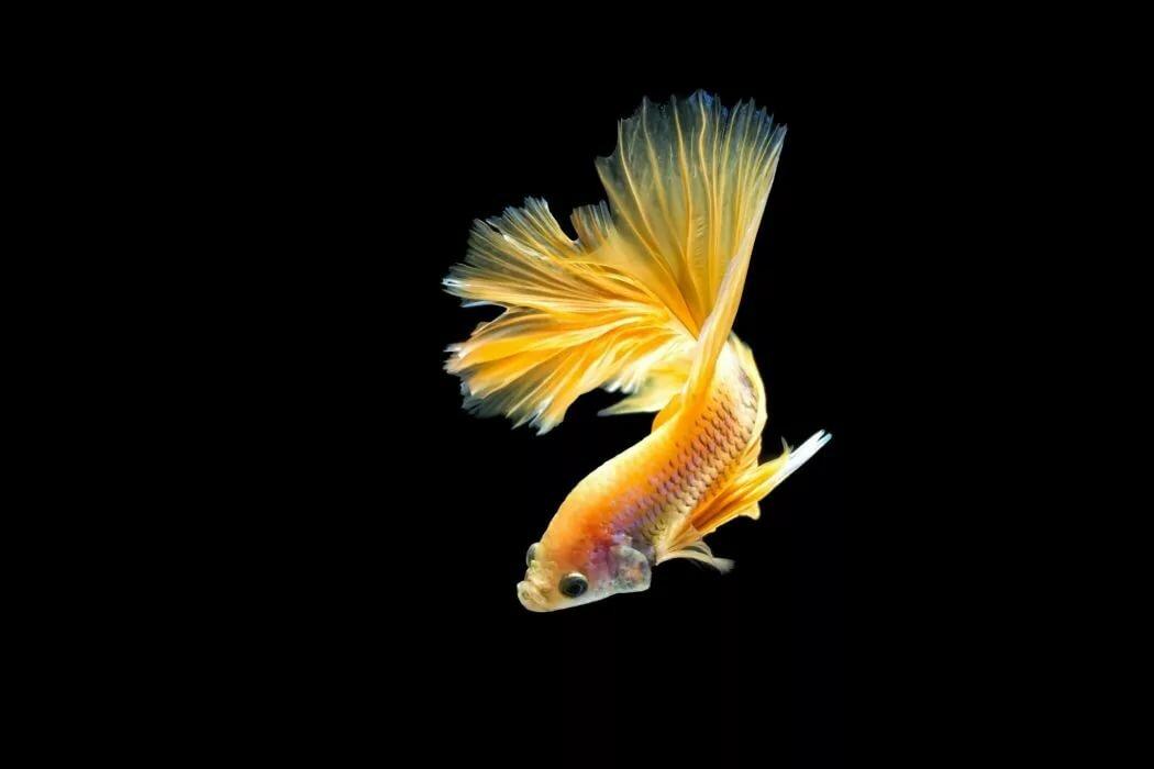 антарктиду, самый картинки на экран телефона рыбы досуге этот