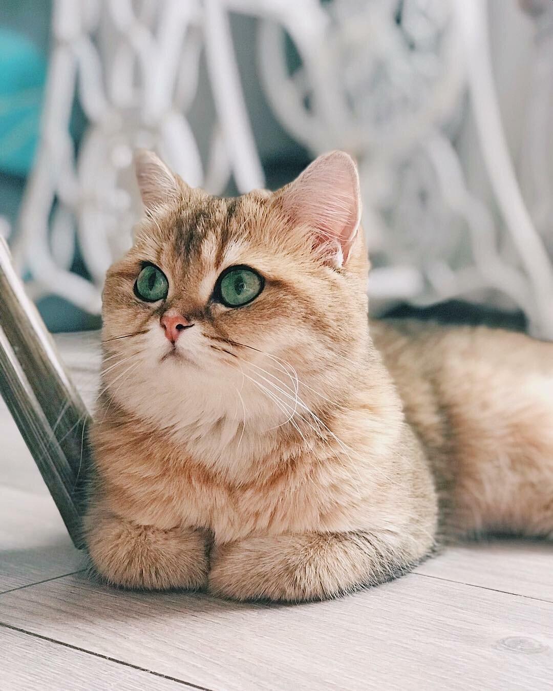 фото самого красивого кота в мире