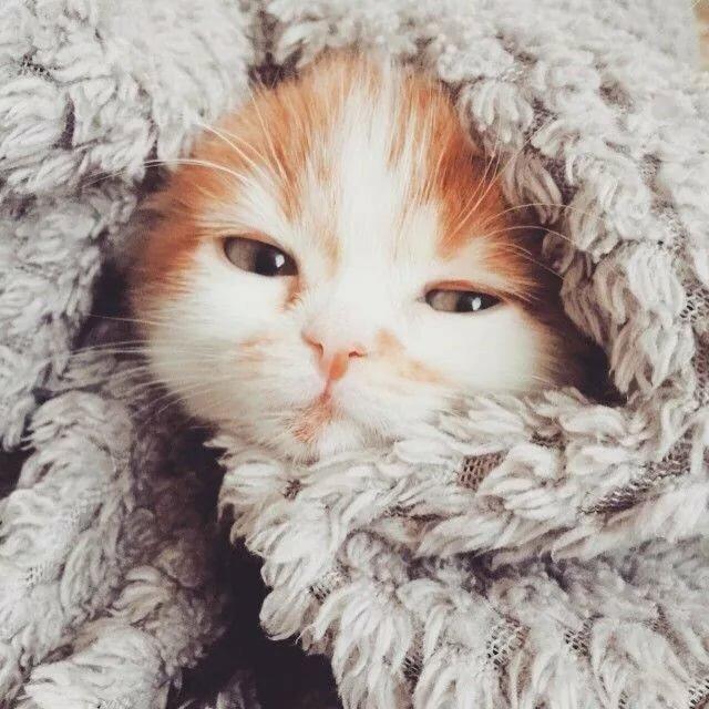 картинки холодно коты среднеспелый, индетерминантный