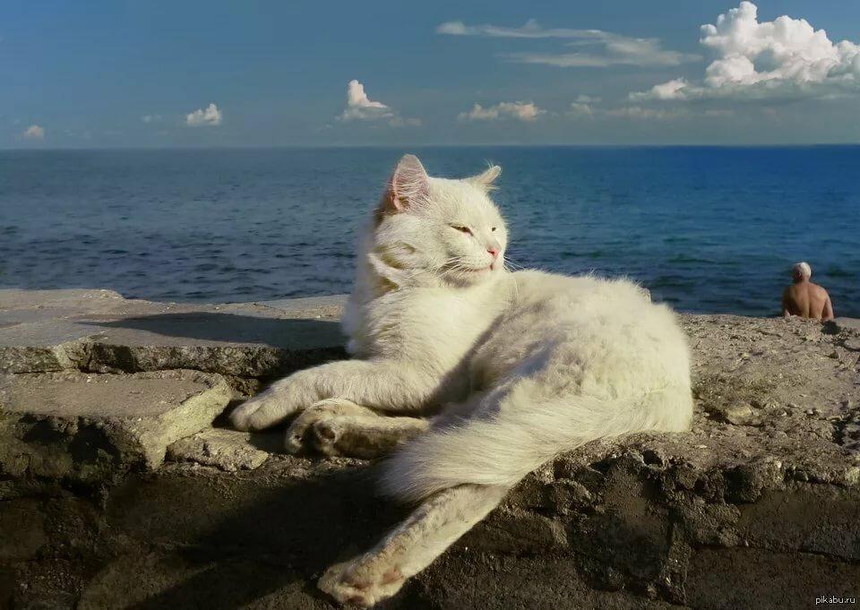 отдыхающий котик фото этой статьи узнаете