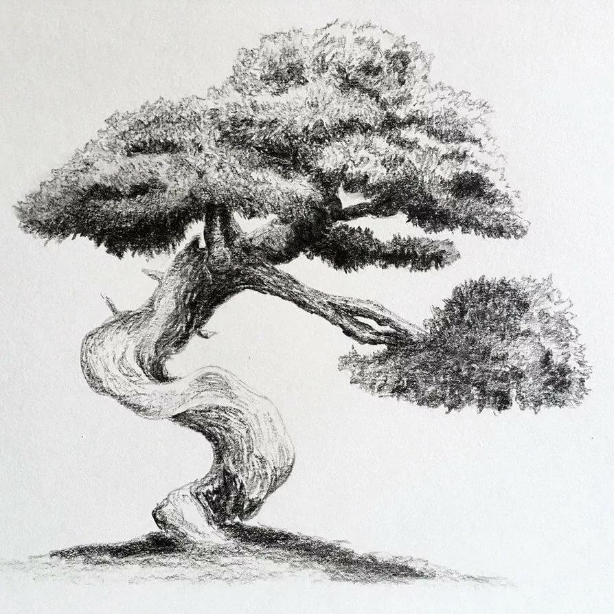 Рисунок дерева карандашом картинки