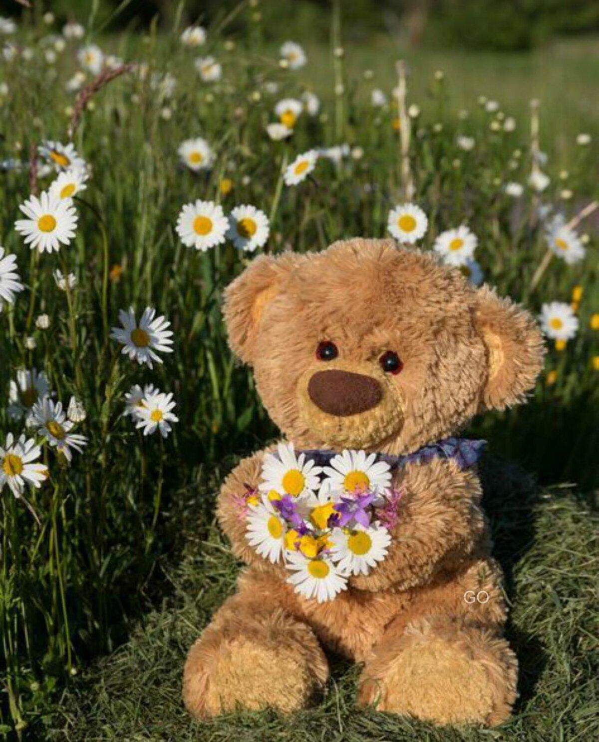 Доброе утро плюшевый медведь картинка
