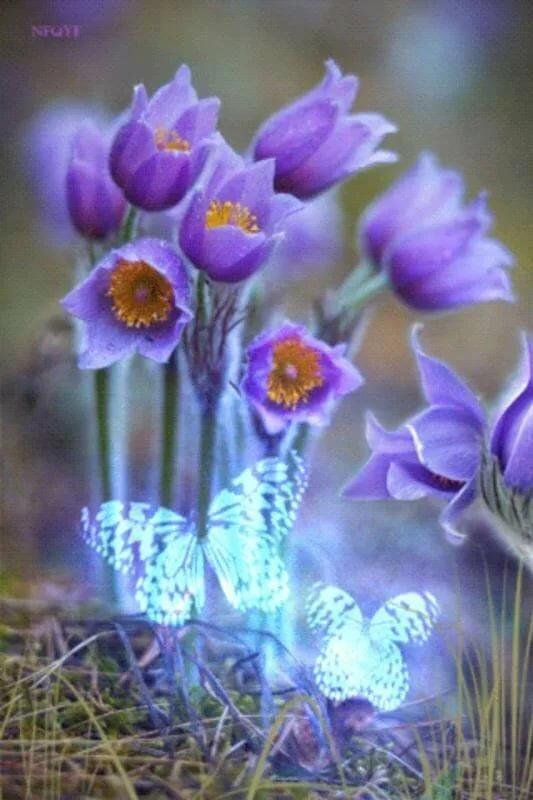 Картинки весенние цветы анимация, открытки день святого