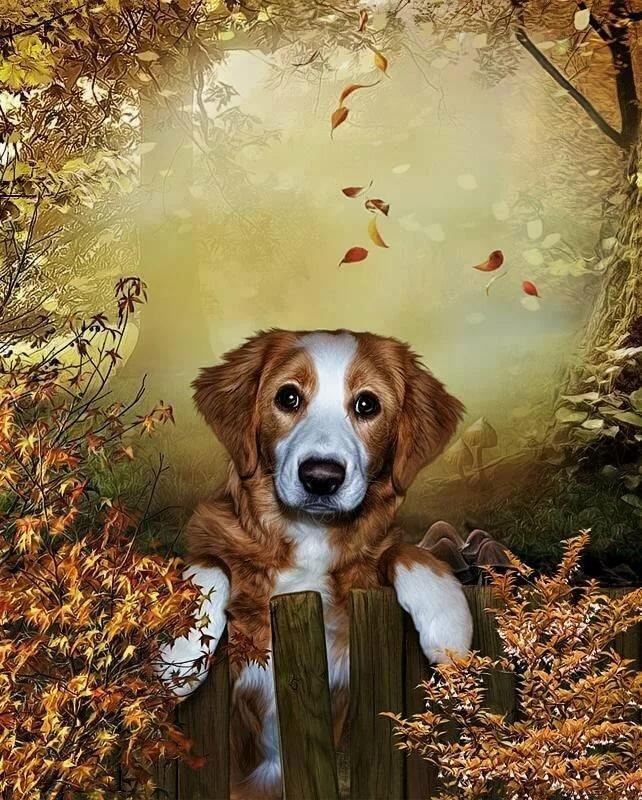 Анимация открытки с собачками