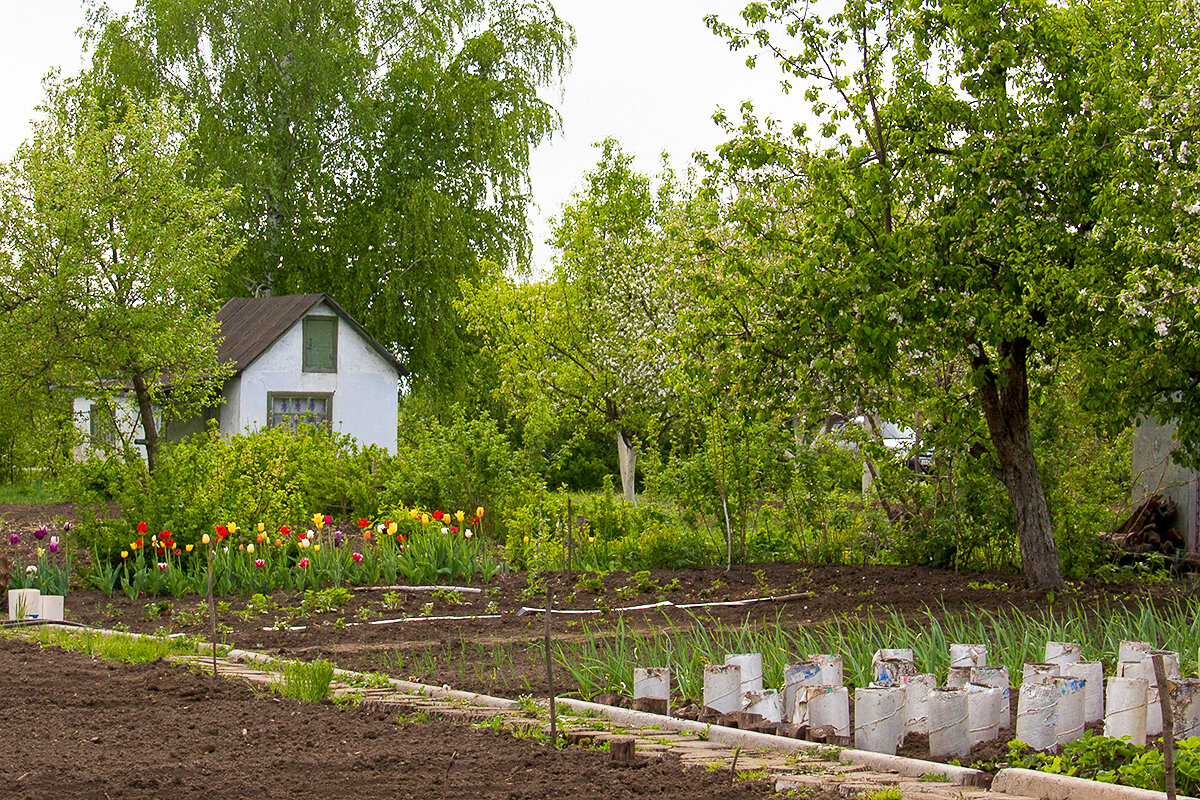 весенний огород с картинками только