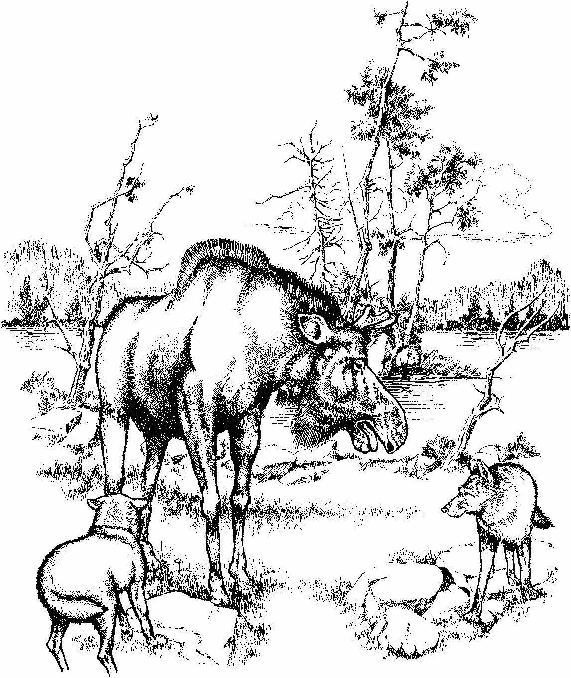 Черно белый рисунок природа животные