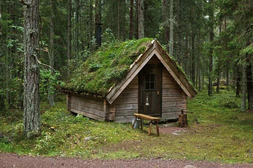 фото домов людей живущих в дикой природе