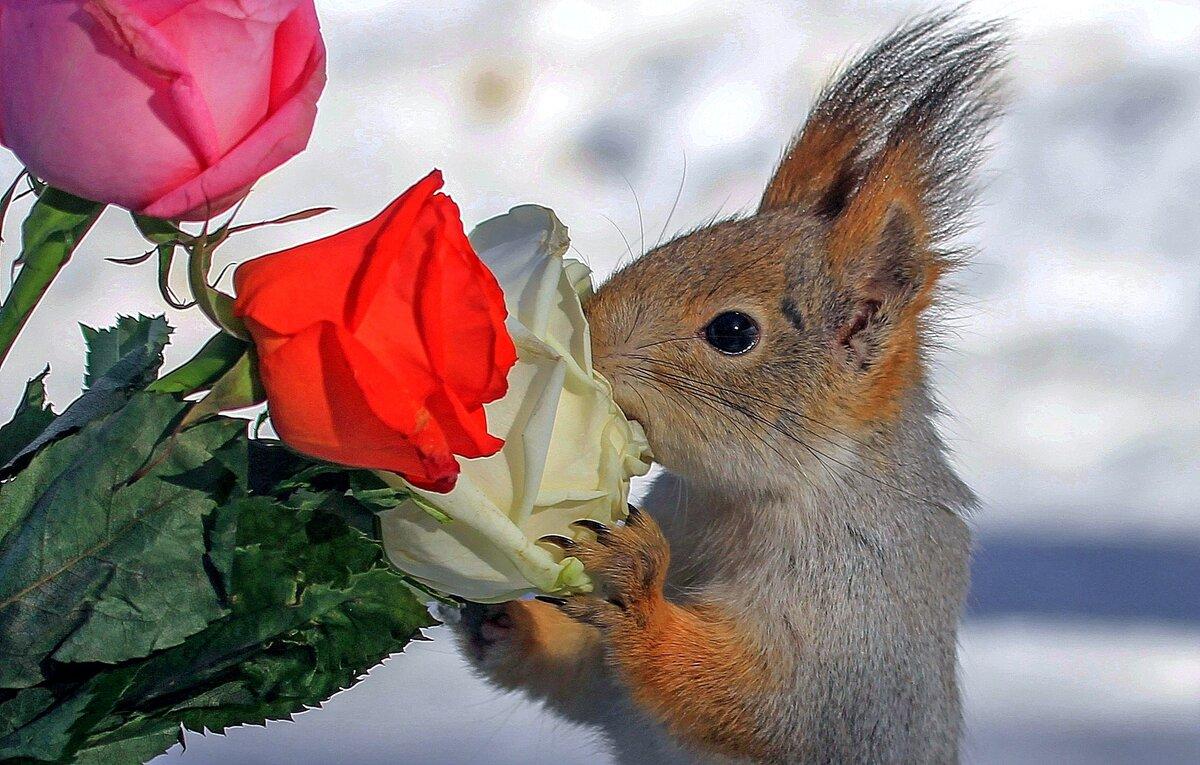 Пожелания в любви с цветами