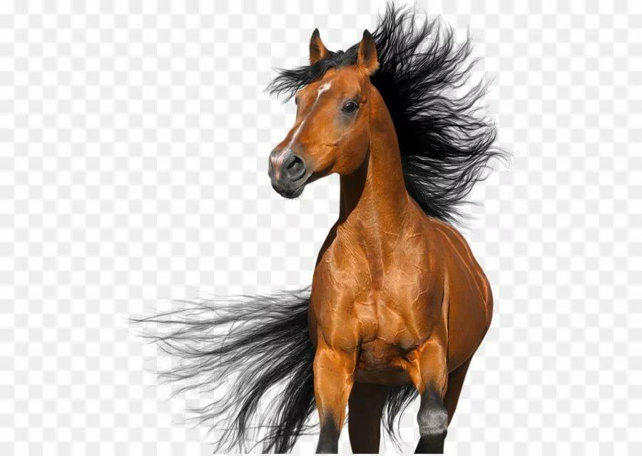 конь картинки без фона