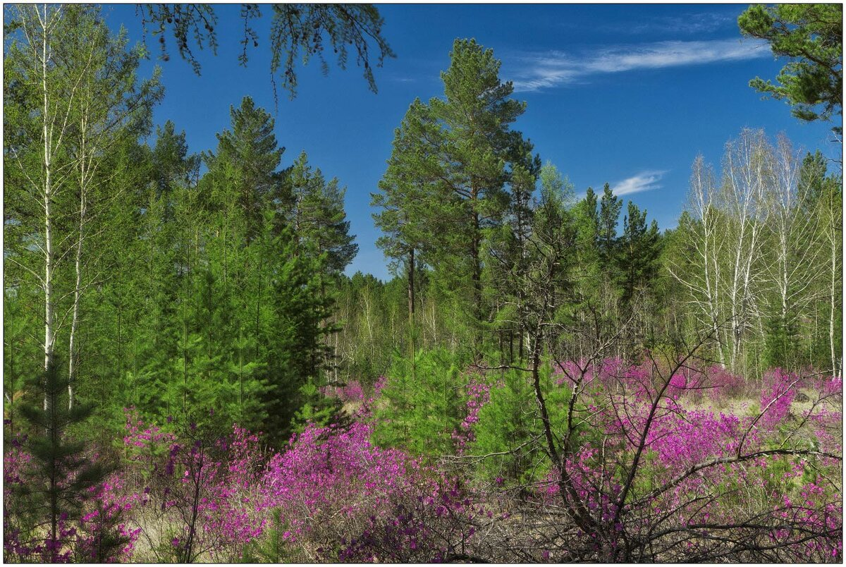 Картинки забайкалье лес