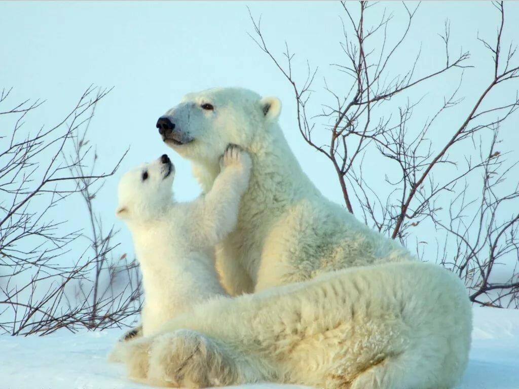 Мама и ребенок животные картинки, днем