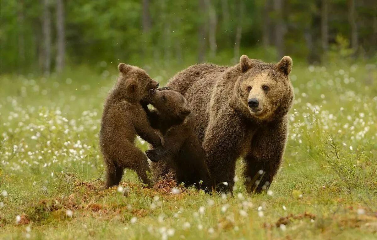 Медведь фото и открытки, картинки