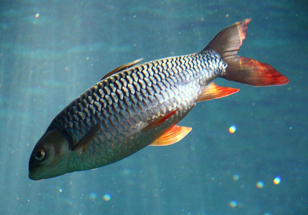 картинки рыб пород вам необходимо будет