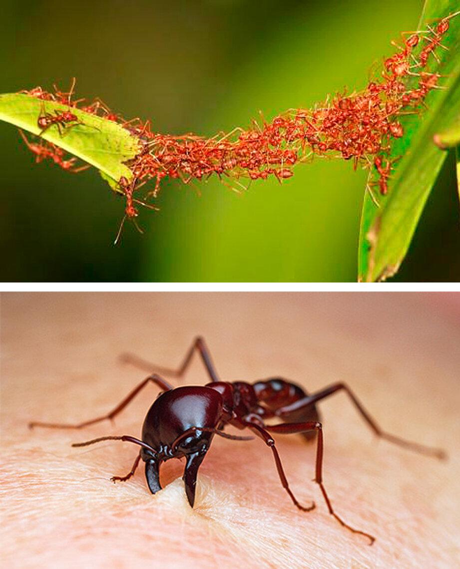 показать картинки бытовые муравьи материал имеет различные