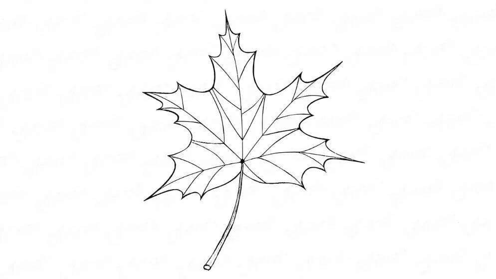 Картинки листочков карандашом
