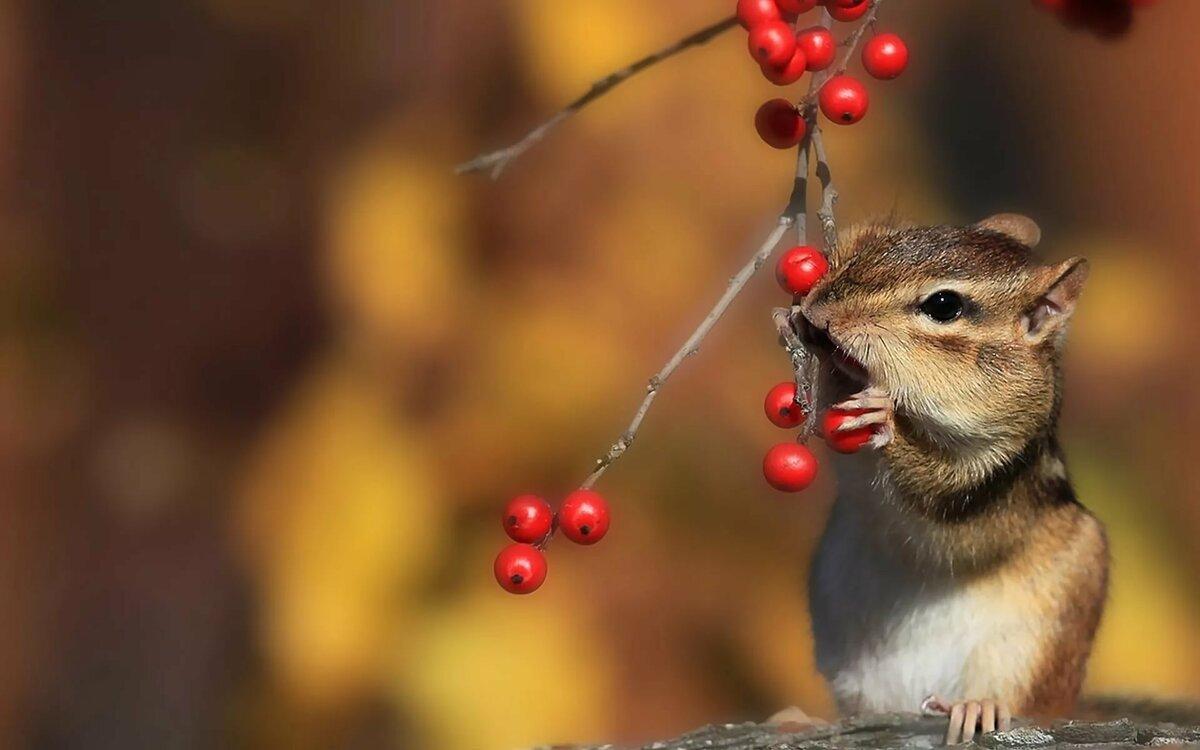сапоги-трубы картинки веселый ноябрь голове ребенка