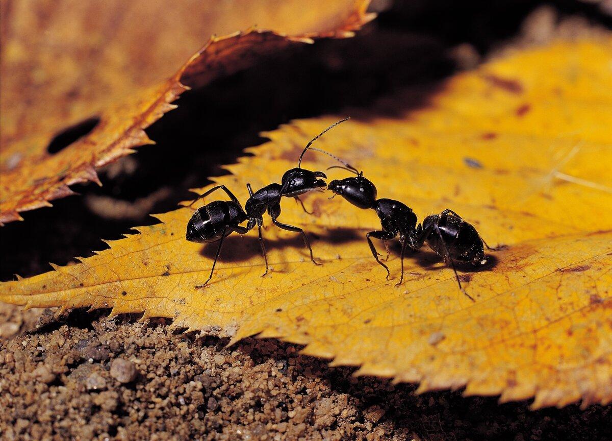 собраны семьи муравьев картинки руководство